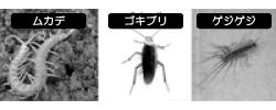 イヤな虫たち